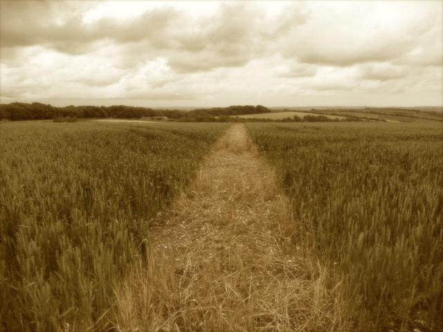 A path through a field